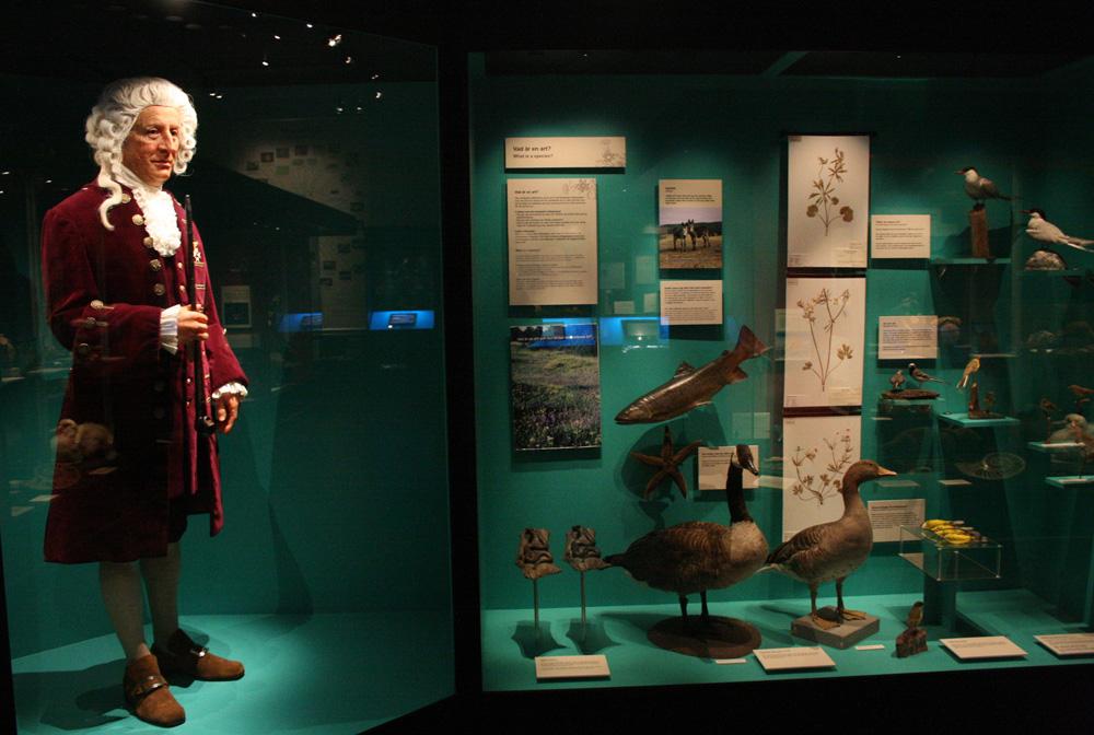 Linné (TTM)
