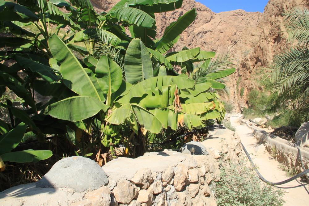 Wadi Shab gyaloglat BB (3)