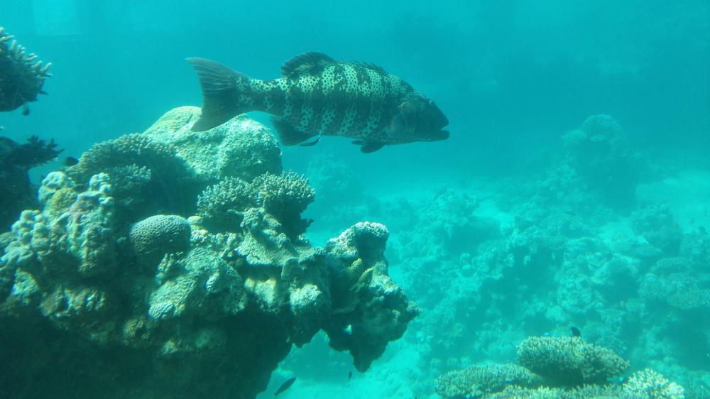 A Vörös-tenger élővilága - Fotó: Barna Béla
