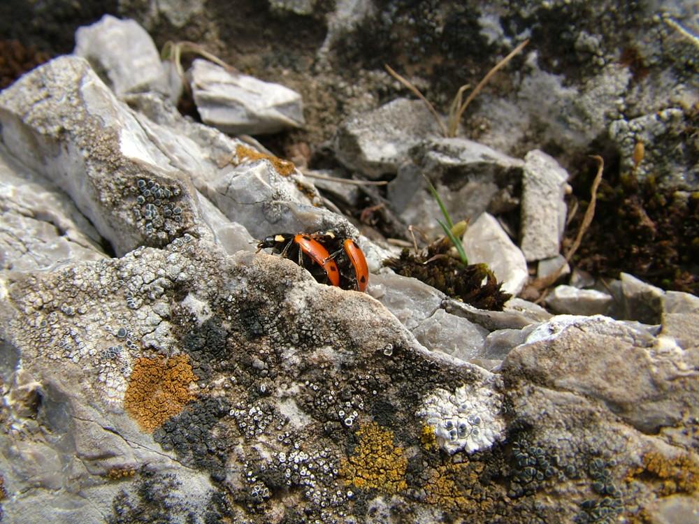 Az Eged kőzete a mészkő - Fotó: Barna Béla