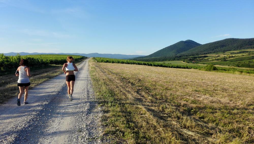 Futás az Eged alatti szőlőben - Fotó: Barna Béla