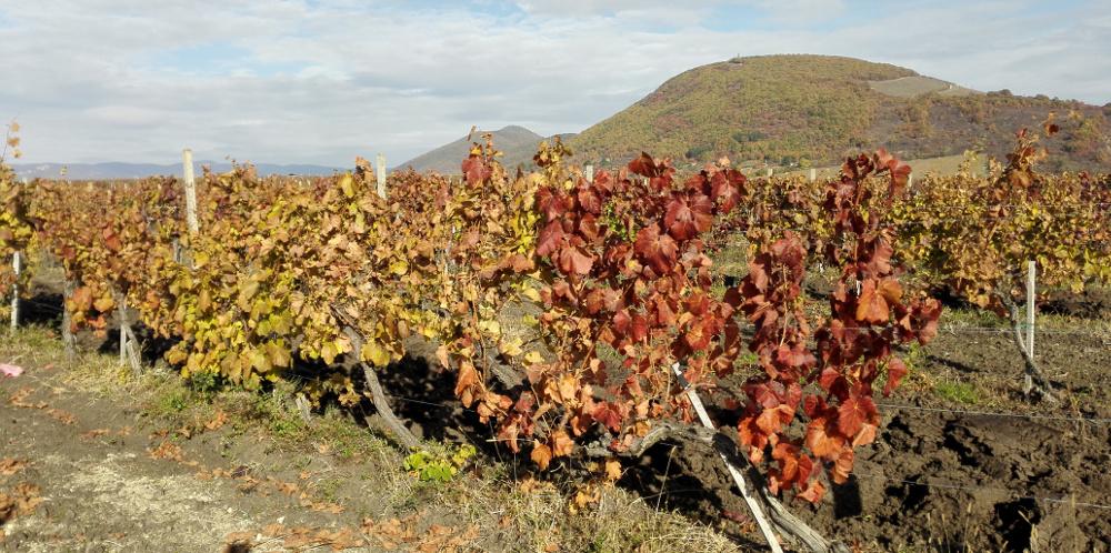 Az Eged ősszel, a szőlőből - Fotó: Barna Béla
