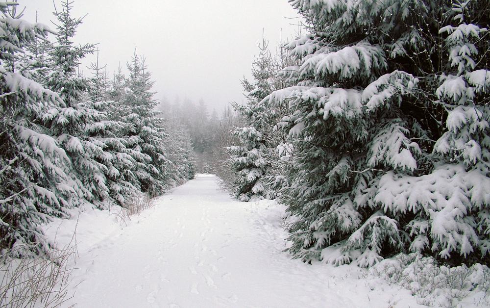 Tél a Botrange-on - Fotó: Barna Béla