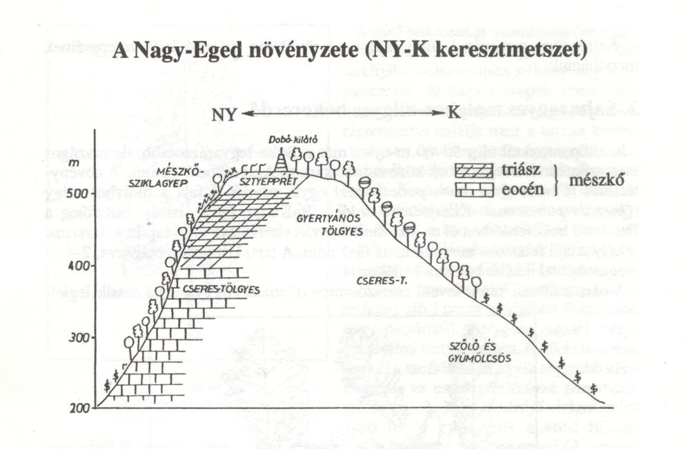 A Nagy-Eged keresztmetszete - Forrás: Kárász Imre