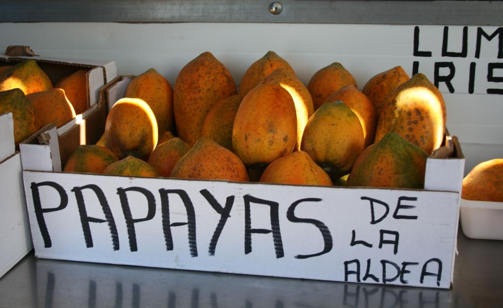 Aldeai papaya - Fotó: Barna Béla