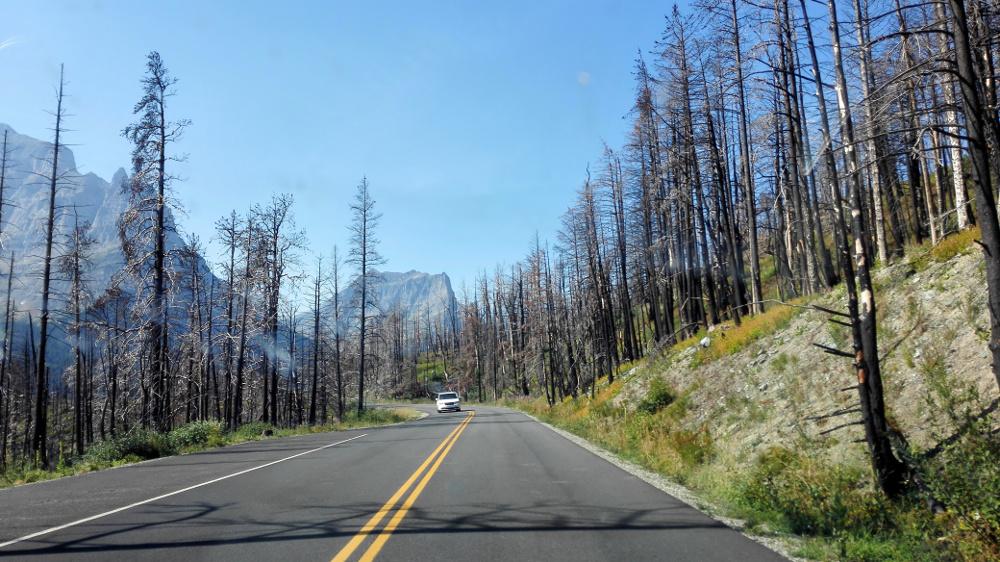 Erdőtűz nyomai - Fotó: Barna Béla