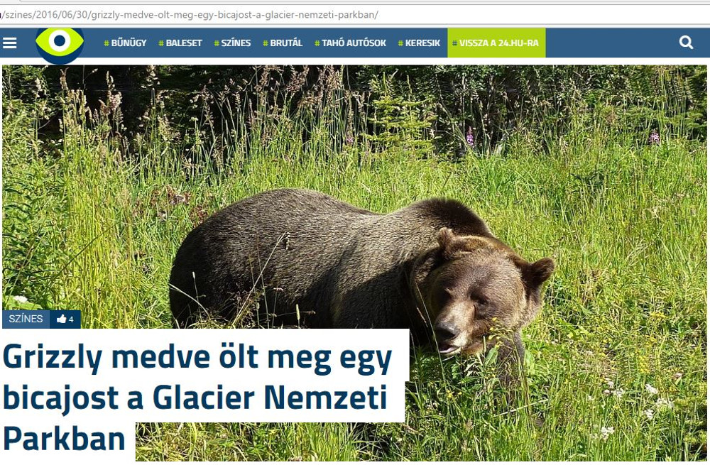 Netes címlap medvetámadásról