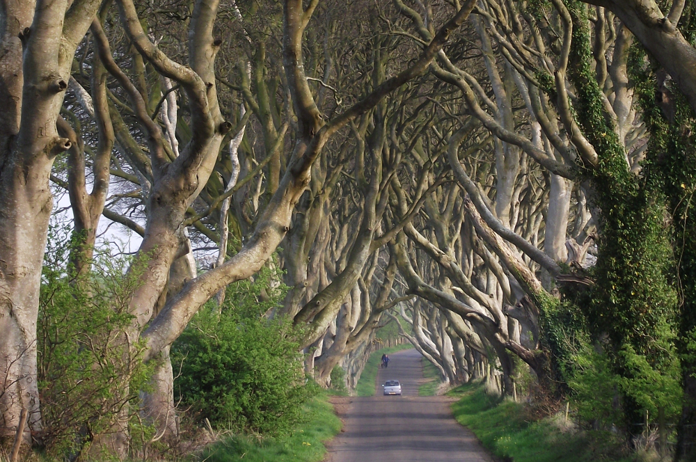 Dark Hedges (1)
